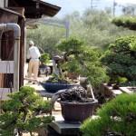 J5 visite de Kinashi