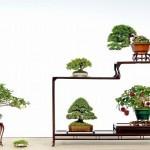 shugaten bonsai tokyo