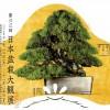 affiche taikan ten 2013