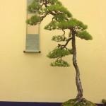 exposition taikaten 2013 - 16