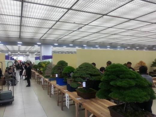 installation de la tainkanten 2013 - 04