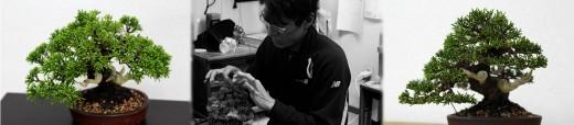 montage mise en forme juniperus par koji hiramatsu