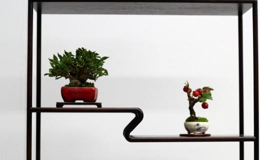 shugaten 2013 - 04 - mame bonsai 03