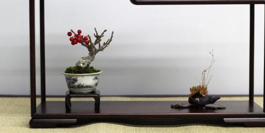 shugaten 2013 - 04 - mame bonsai 04
