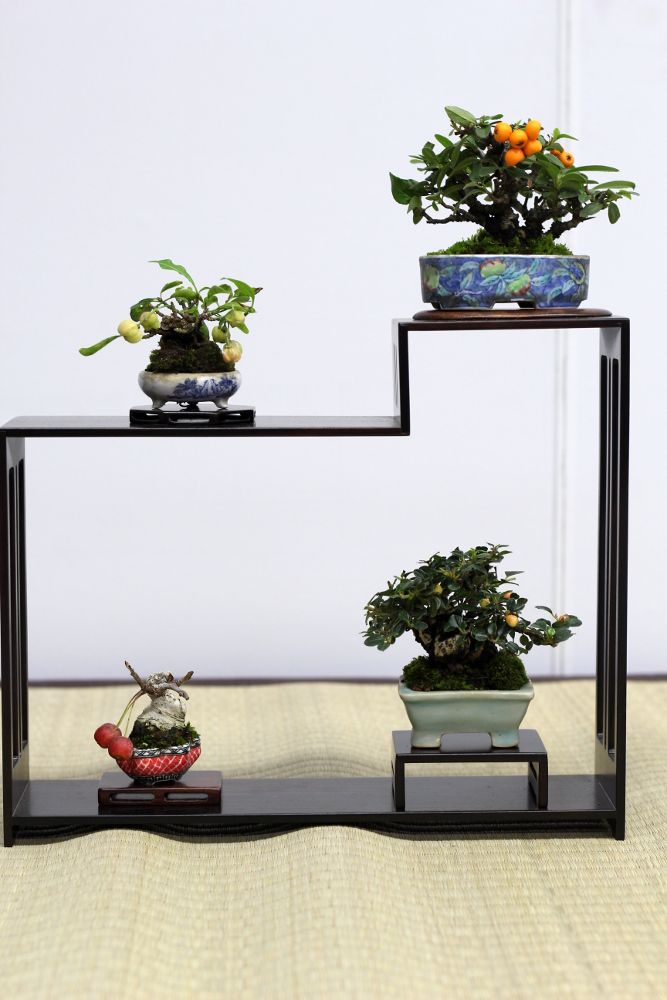 shugaten 2013 - 04 - mame bonsai 05