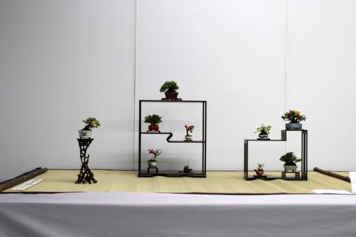 shugaten 2013 - 04 - mame bonsai 09
