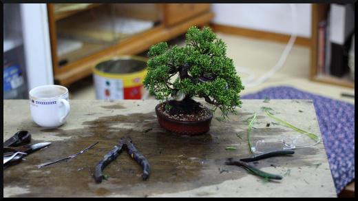 les bases du bonsaï