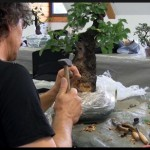atelier ascap bonsai club 2011