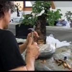 atelier ascap bonsai club 2011