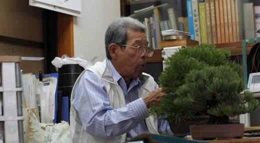 kuniaki hiramatsu - travail sur un pin noir en 2013