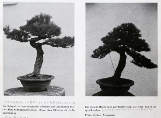 mise en forme d'un pin en 1979 par kuniaki hiramatsu et mr Hashimoto