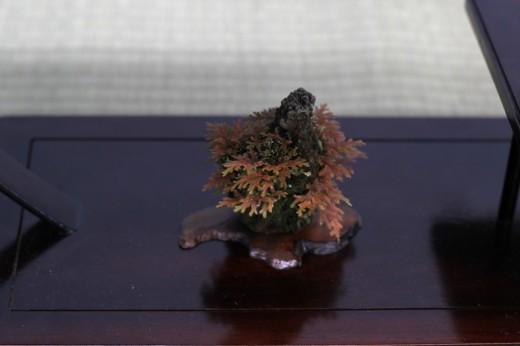 shugaten 2013 - 05 - kusamono fougere sur roche 2