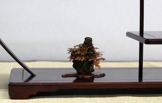 shugaten 2013 - 05 - kusamono fougere sur roche