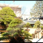 soins culture des bonsai