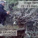 Stage de yamadori dans les corbières