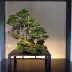 bonsai de kimura exposé au musée d'omiya 2
