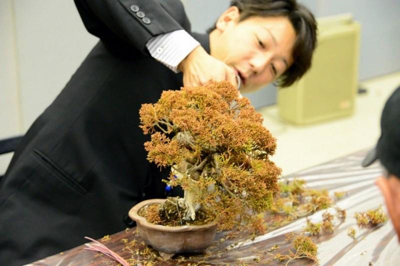 Taïga Urushibata en plein travail de mise en forme sur un shimpaku.