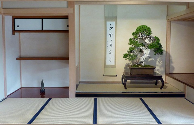 genévrier exceptionnel exposé en tokonoma à Omiya
