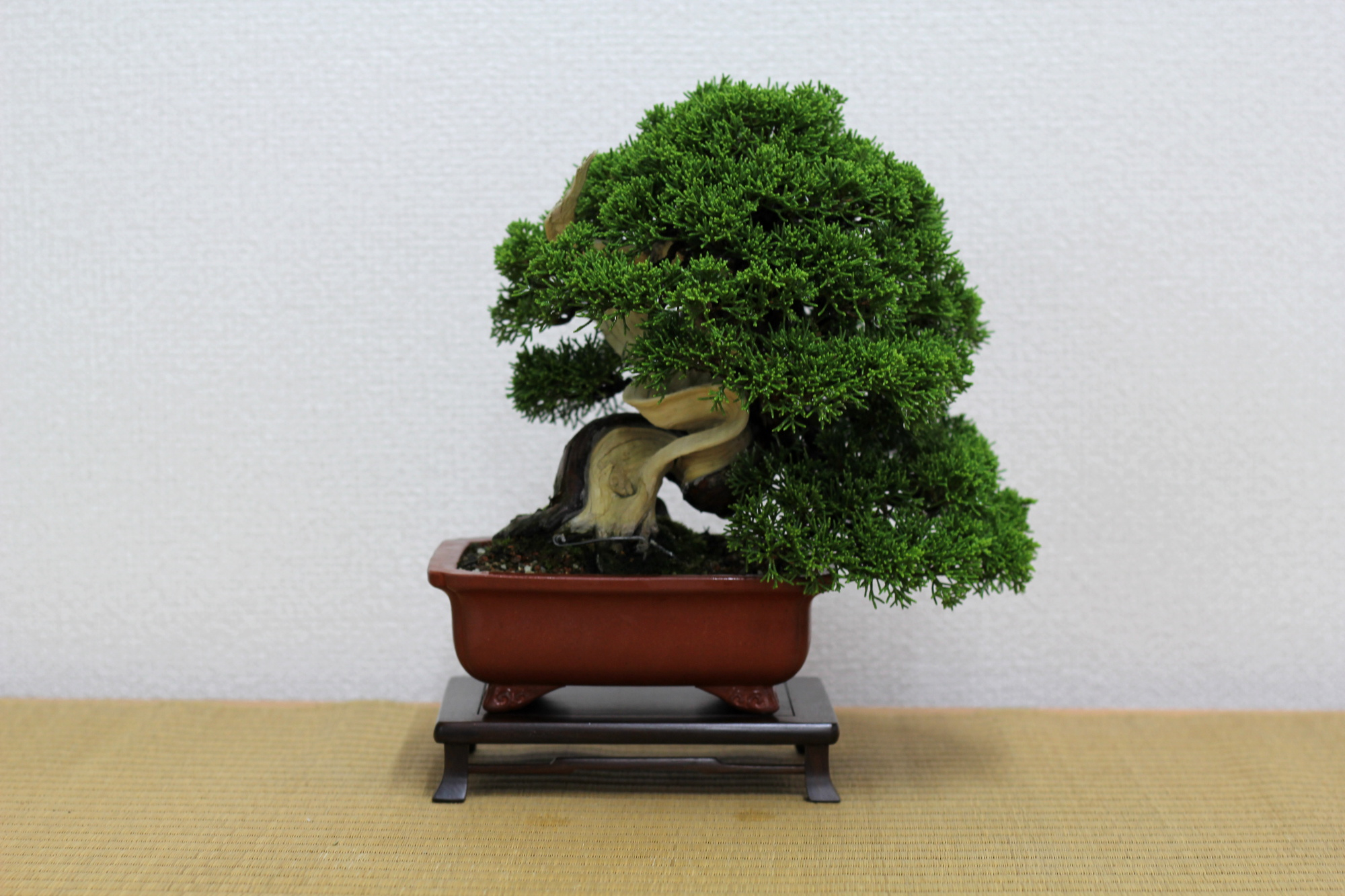 forum medias et autres sites bonsai blog actubonsa