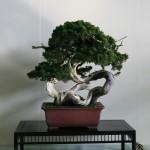 Revue du bonsai web – janvier 2014 n°23