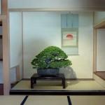 présentation en tokonoma shin - pin
