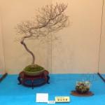 kokufu-ten 2014 - 01 (ref-11)