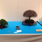 kokufu-ten 2014 - 03 (ref-11)
