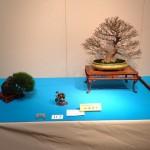 kokufu-ten 2014 - 04 (ref-11)