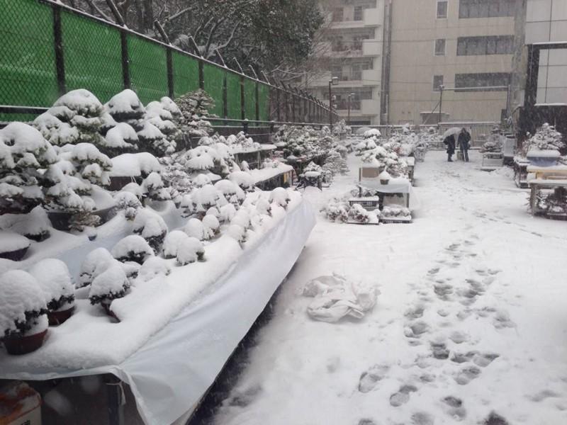 kokufu-ten 2014 - neige sur Tokyo 02 (ref-16)