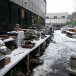 kokufu-ten 2014 - neige sur Tokyo 03 (ref-17)
