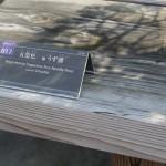 uzushio - pin blanc - omiya bonsai museum 06