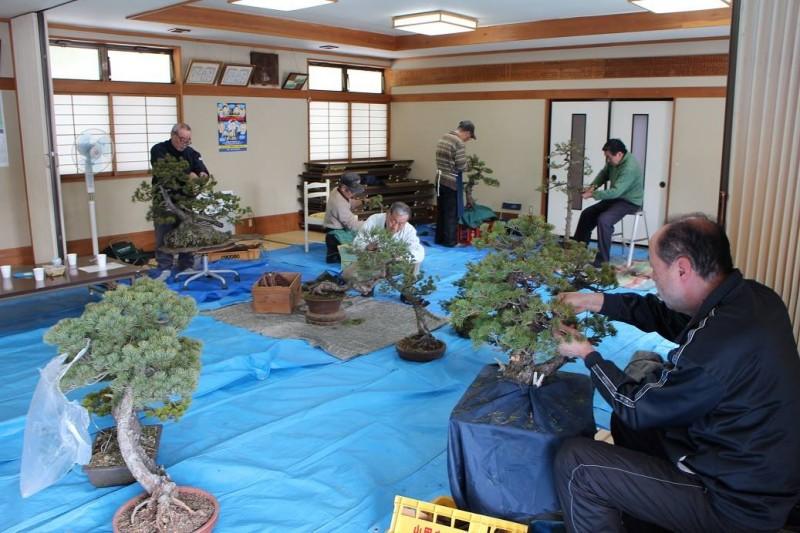 atelier de bonsai avec maitre abe - 01