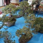atelier de bonsai avec maitre abe - 02