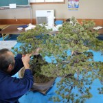 atelier de bonsai avec maitre abe - 04