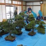 atelier de bonsai avec maitre abe - 05