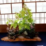 composition de kusamono printanière
