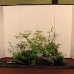 composition d'herbacées