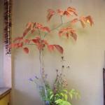 présentation en tokonoma pour bonsai atypique