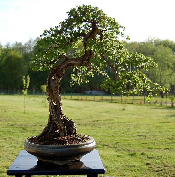 L'arbre prend du caractère
