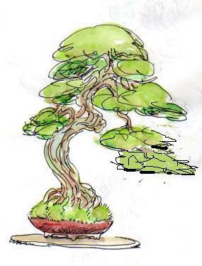 Histoire d 39 arbre orme japonica la faille - Dessin bonzai ...