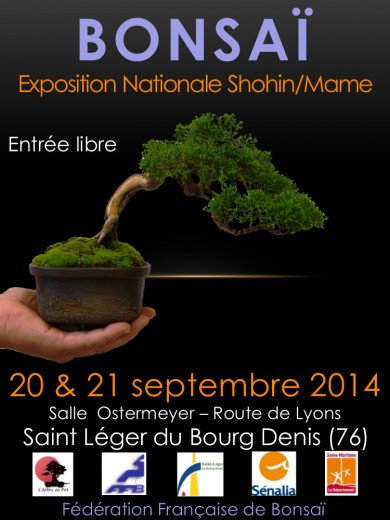 exposition bonsai shohin mame bonsai 2014 rouen