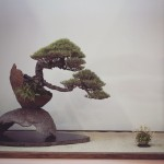 european bonsai-san show 2014 - 04