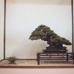 european bonsai-san show 2014 - 06
