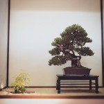 european bonsai-san show 2014 - 11