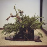 european bonsai-san show 2014 - 16