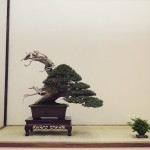 european bonsai-san show 2014 - 18