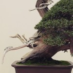 european bonsai-san show 2014 - 21