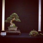 european bonsai-san show 2014 - 24