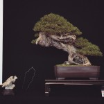 european bonsai-san show saulieu 2014 - 02