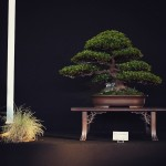 european bonsai-san show saulieu 2014 - 04